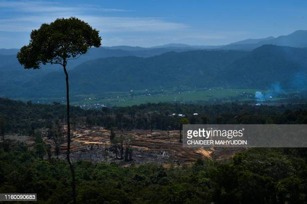 This photo taken on July 27, 2019 show a general view of a land clearing area near protected forest in Tangse, Aceh province. - Sumatran elephants...