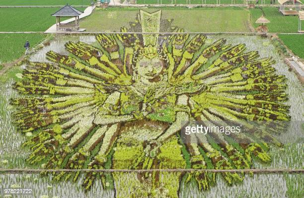 TOPSHOT This photo taken on June 16 2018 shows an image of a thousandhand Bodhisattva created using different varieties of rice in a paddy in...