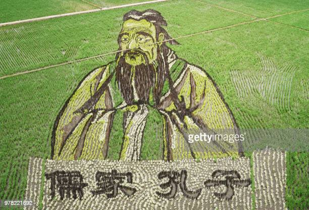 This photo taken on June 16 2018 shows an image of Confucius created using different varieties of rice in a paddy in Shenyang in China's northeast...
