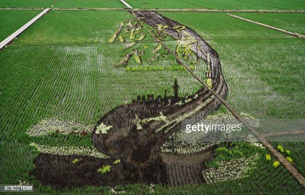 This photo taken on June 16 2018 shows an image with the words 'Amazing China' created using different varieties of rice in a paddy in Shenyang in...