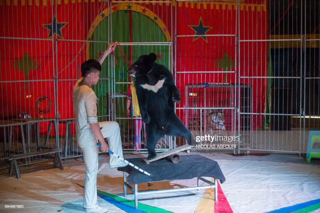 This photo taken on June 2, 2018 shows a circus member and a Harbin black bear performing during a show at the camp of the Chinese Prosperous Nation Circus Troupe in the National Forest Park of Guanyin Mountain in Dongguan. - The use of wild animals in circus shows has come under growing criticism around the world, with some countries banning the practice, but for the Chinese troupe, the beasts are considered a major attraction. (Photo by NICOLAS ASFOURI / AFP) / TO GO WITH AFP STORY China-animal-circus by Joanna Chiu and Xin Liu
