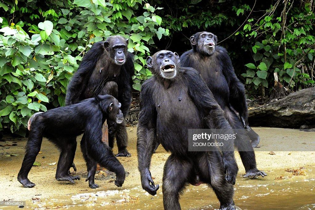 LIBERIA-ANIMAL-BIOTECHNOLOGY : News Photo