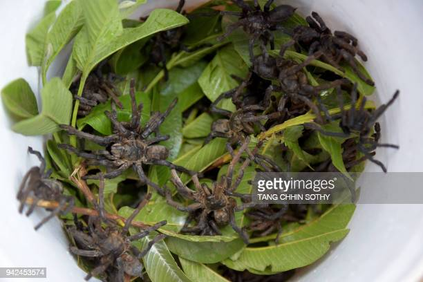 This photo taken on March 14 2018 shows live tarantulas and leaves in a container at Skun town in Kampong Cham province While a plate piled high with...