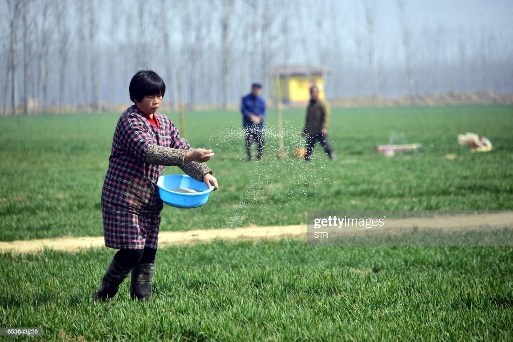 CHINA-AGRICULTURE-HEALTH-SCIENCE : News Photo