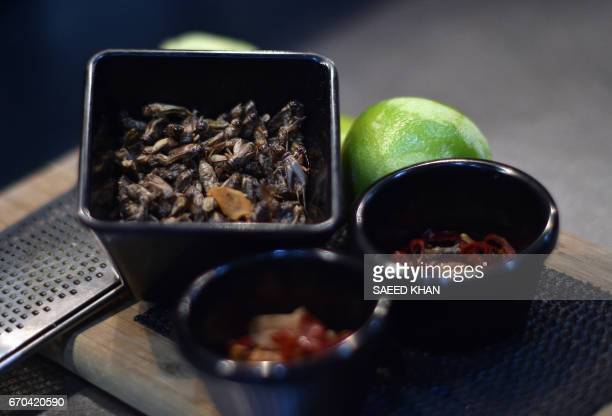 This photo taken on March 16 2017 shows ingredients for a starter that includes crickets on a kitchen table at a restaurant in Sydney Roasted...