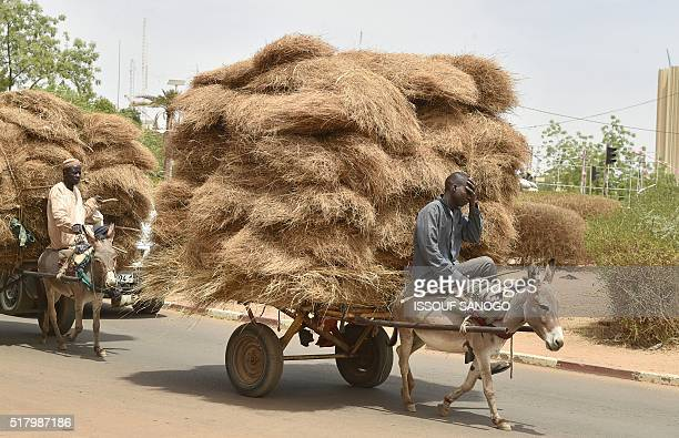 This photo taken on March 18 2016 shows men on donkey back transporting bundles of straw onto carts through a district of Niamey / AFP / ISSOUF SANOGO