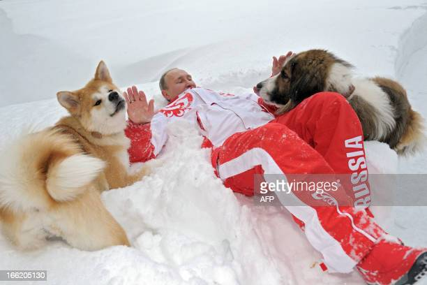 This photo taken on March 24 2013 shows Russin President Vladimir Putin as he plays with his dogs 'Buffy' and 'Yume' at his residence NovoOgariovo...