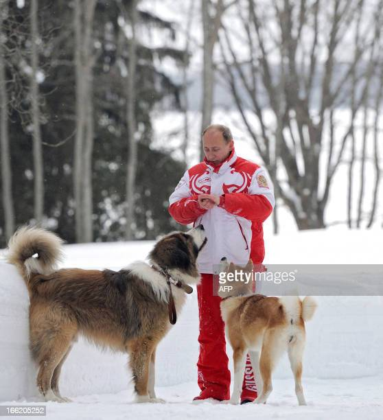 23 Buffy Vladimir Putin S Dog Photos And Premium High Res Pictures Getty Images