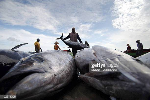 This photo taken on May 10 2009 shows fishermen unloading a fresh catch of tuna at Bali's fishing village in Jimbaran Rising water temperatures sea...