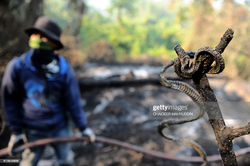 INDONESIA-ENVIRONMENT-FOREST-FIRE-HAZE : News Photo