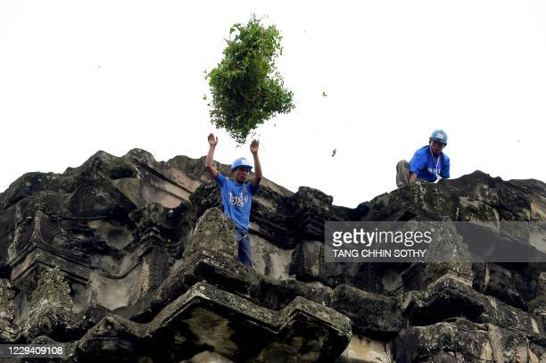 This photo taken on October 12, 2020 shows a gardener throwing down tree saplings removed from the exterior of the Angkor Wat temple in Siem Reap...