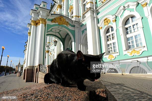 This photo taken on October 14 2015 shows a cat in front of the State Hermitage Museum in St Petersburg The Hermitage's cats guard the museum's...