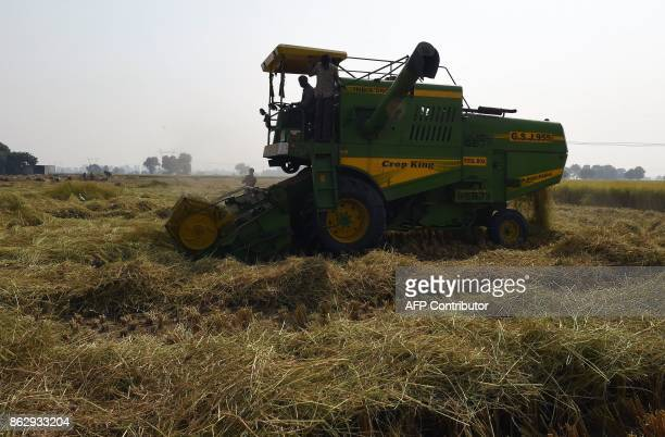 This photo taken on October 16, 2017 shows a farm labourer cutting the paddy crop with a harvester machine in a field in Sonipat in the northern...