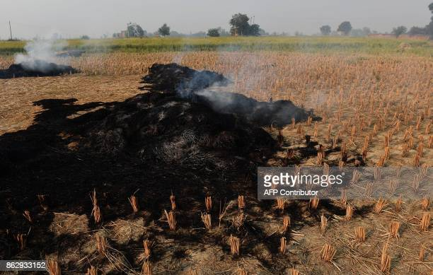 This photo taken on October 16 2017 shows paddy crop stubble smouldering in a field in Sonipat in the northern Indian state of Haryana As Hindus...