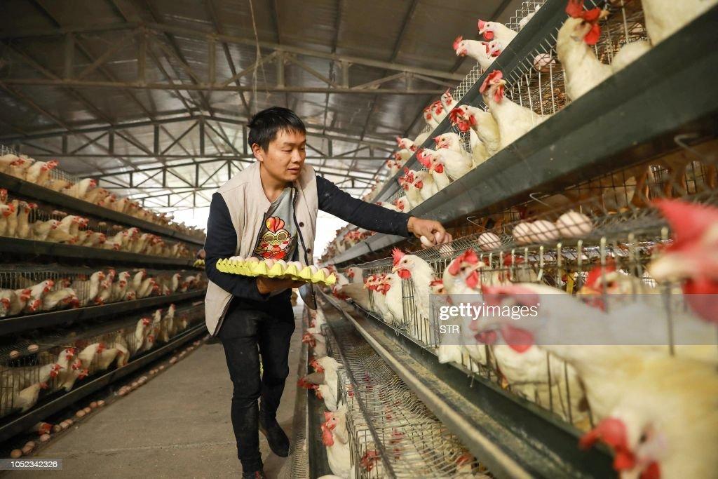 CHINA-ECONOMY-GROWTH : News Photo