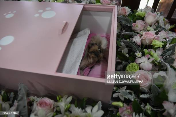 This photo taken on September 14 2017 shows Dollar a sixyearold Shih Tzu dog inside a pink coffin during the pet's funeral at Wat Krathum Suea Pla...