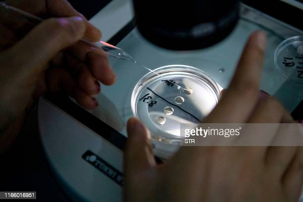 This photo taken on September 2, 2019 shows a laboratory technician checking samples with a microscope at the Chinese company Sinogene, a pet cloning...