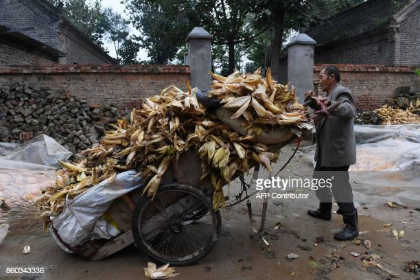 This photo taken on September 27 2017 shows a man loading corn husks on a cart in a village in Lankao in China's central Henan province When...