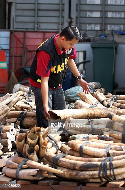 This photo taken on September 5 2011 shows a Malaysian customs officer examining two tonnes of elephant tusks at the West Port in Kalang Malaysian...