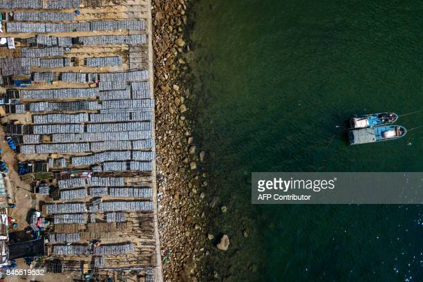 This photo taken on September 9 2017 shows Chinese fishermen drying fish in the sun in Shenzhen China's southern Guangdong province / AFP PHOTO / STR...