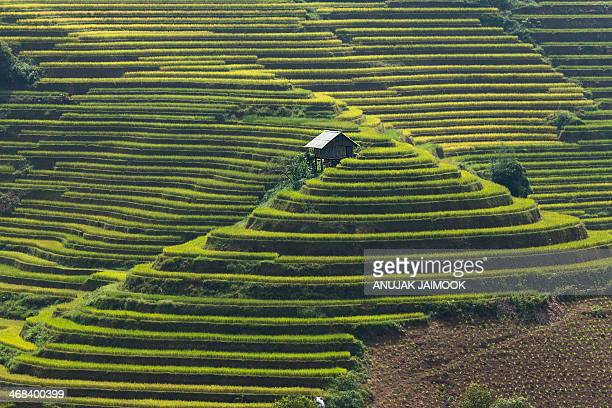 CONTENT] This photo was shot from Mu Cang Chai which located in Yenbai province the north of Vietnam There is one of the most interesting place for...