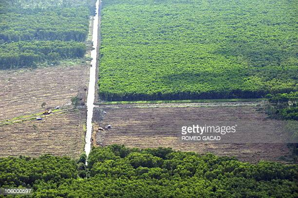 This photograph taken during an aerial survey mission by Greenpeace over Sumatra island shows trees being grown in an agroforestry tree plantation...
