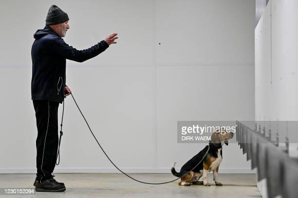 This photograph taken on December 16 shows the training process of a coronavirus detection dog at 'K9 Detection', in Jabbeke near Bredene in Belgium....