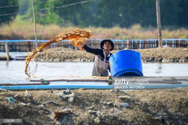 This photograph taken on December 8, 2020 shows a man working for the cyst production of brine shrimp in a salt pond at the Salt Lake De Maeklong...