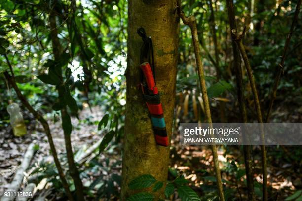 This photograph taken on February 11 2018 shows a traditional Malaysian honey hunter's knife hanging on a tree as they fix a ladder for harvesting...