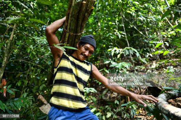 This photograph taken on February 11 2018 shows traditional Malaysian honey hunters Abdul Samad Ahmad carrying wood to make ladder for harvesting...