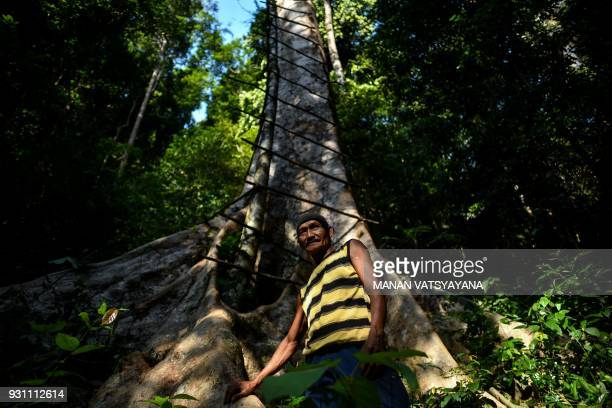 This photograph taken on February 11 2018 shows traditional Malaysian honey hunter Abdul Samad Ahmad standing at the foot of a giant Tualang tree in...