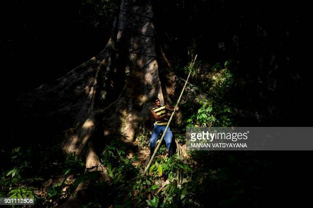 This photograph taken on February 11 2018 shows traditional Malaysian honey hunter Abdul Samad Ahmad cutting wood to make ladder for harvesting...