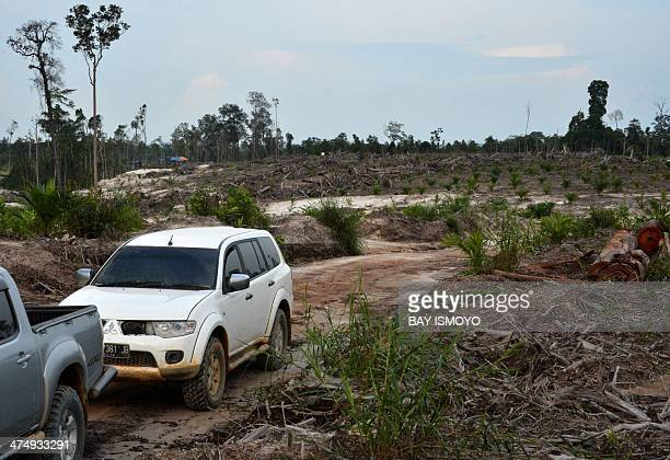 This photograph taken on February 21 2014 during a ground survey mission by Greenpeace in Kapuas district Central Kalimantan province on Indonesia's...