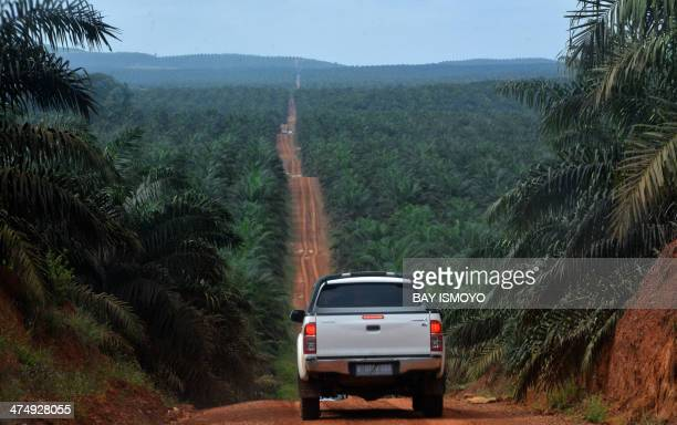 This photograph taken on February 23, 2014 during a ground survey mission by Greenpeace at East Kotawaringin district in Central Kalimantan province...