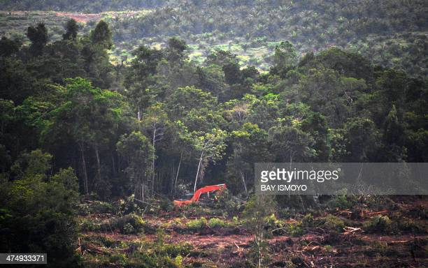 This photograph taken on February 23 2014 during a ground survey mission by Greenpeace at East Kotawaringin district in Central Kalimantan province...