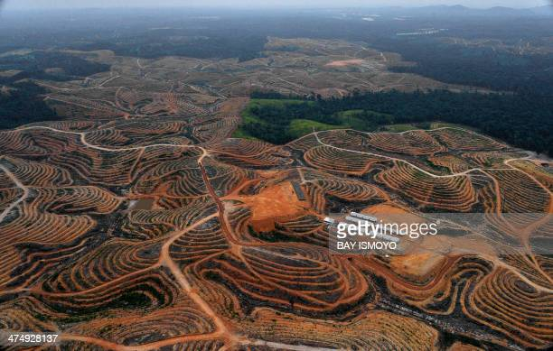 This photograph taken on February 24 2014 during an aerial survey mission by Greenpeace at East Kotawaringin district in Central Kalimantan province...