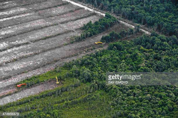 This photograph taken on February 24, 2014 during an aerial survey mission by Greenpeace at East Kotawaringin district in Central Kalimantan province...