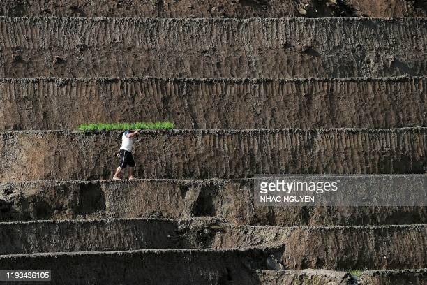 TOPSHOT This photograph taken on January 12 2020 shows a Vietnamese farmer planting paddy crops on a terraced field in Vietnam's northern...