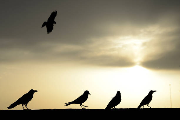 This photograph taken on March 21 2018 show birds during sunset after a rainy day in Jalandhar / AFP PHOTO / SHAMMI MEHRA