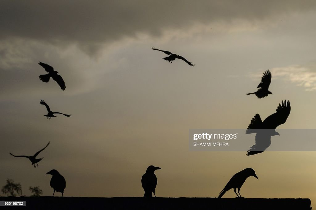 TOPSHOT This photograph taken on March 21 2018 show birds during sunset after a rainy day in Jalandhar