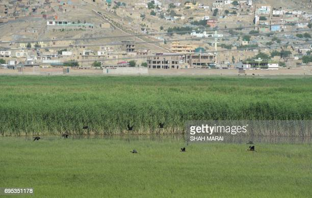 This photograph taken on May 29 2017 shows birds flying at the Kole Hashmat Khan wetland in the outskirts of Kabul A rare Afghan marsh that was once...