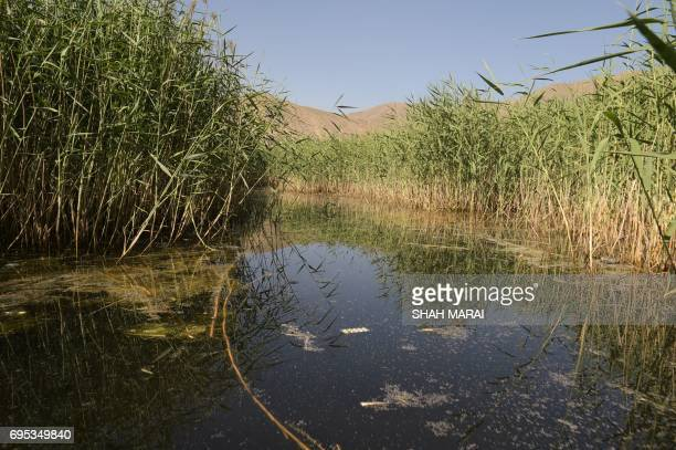 This photograph taken on May 29 2017 shows the lake from the birdwatching tower at the Kole Hashmat Khan wetland in the outskirts of Kabul A rare...
