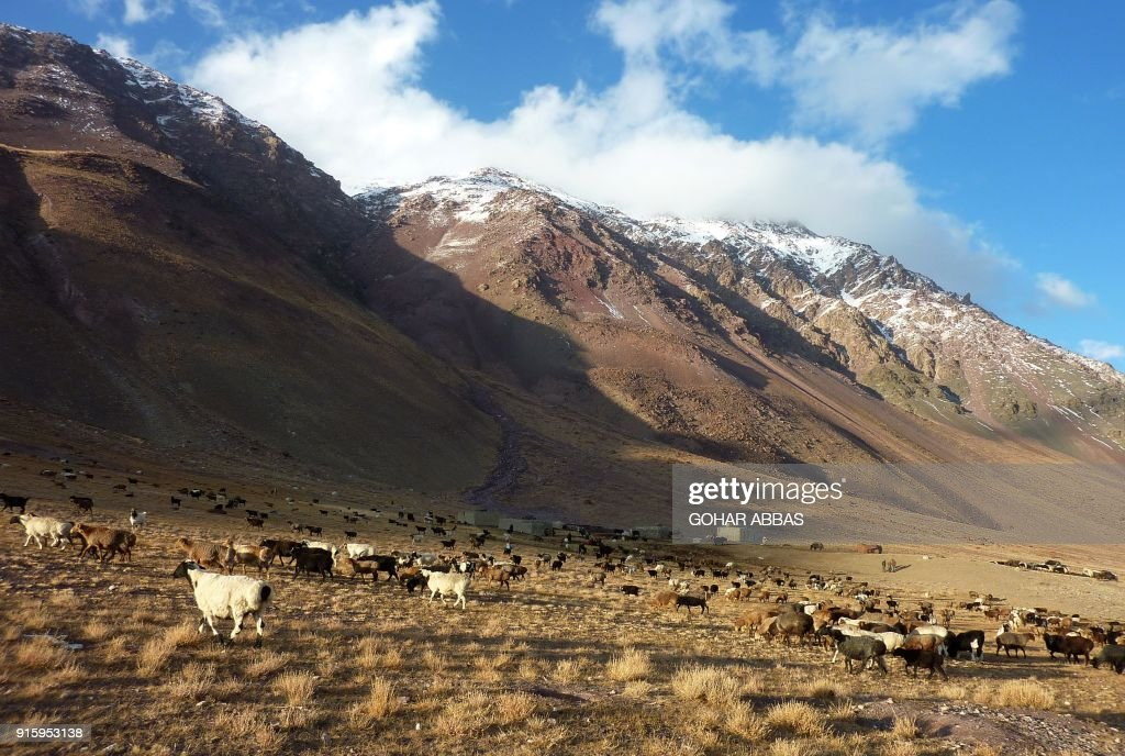 This photograph taken on October 7, 2017 shows livestock of Afghan Wakhi nomads grazing near the Chinese border in the Wakhan Corridor in Afghanistan. The region is so remote that its residents, known as the Wakhi - a tribe of roughly 12,000 nomadic people who populate the area - are untouched by decades of conflict devastating their country. / AFP PHOTO / Gohar ABBAS / TO GO WITH Afghanistan-Wakhan-Taliban-war,FEATURE by Gohar Abbas