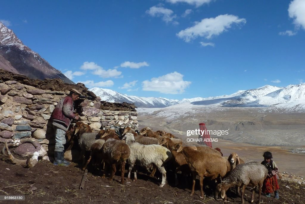This photograph taken on October 8, 2017 shows Afghan Wakhi nomad shepherd Wafa Baig (L) taking his cattle into a pen in the Wakhan Corridor in Afghanistan. The region is so remote that its residents, known as the Wakhi - a tribe of roughly 12,000 nomadic people who populate the area - are untouched by decades of conflict devastating their country. / AFP PHOTO / Gohar ABBAS / TO GO WITH Afghanistan-Wakhan-Taliban-war,FEATURE by Gohar Abbas