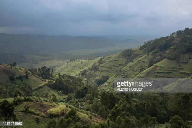 This photograph, taken on September 28 shows the crops bordering Virunga National Park, northeast of the Democratic Republic of Congo. - In North...