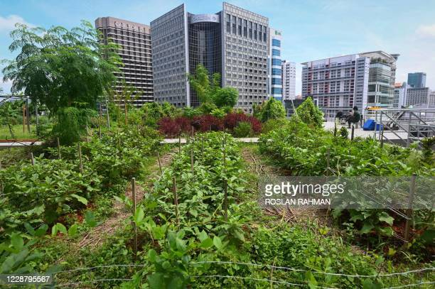 This photograph taken on September 7, 2020 shows the general view of a rooftop garden used for urban farming to grow edible plants above the Raffles...