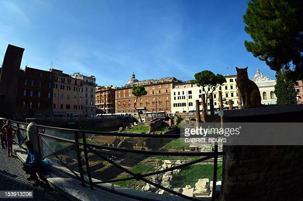 This picture shows a general view on October 11, 2012 downtown Rome of the Largo di Torre Argentina, the exact spot among ancient ruins where Roman...