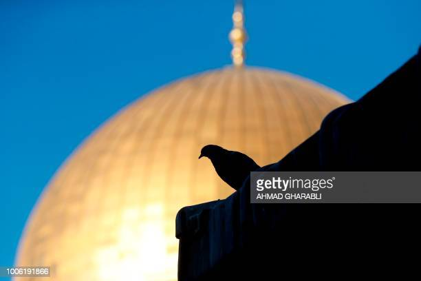 This picture shows a pigeon before the Dome of the Rock at the alAqsa mosque compound in the Jerusalem's Old City on July 27 after the site was...
