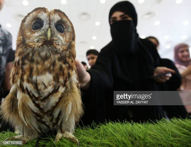This picture shows a Tawny owl displayed at an education facility in Kuwait city on December 1 2018