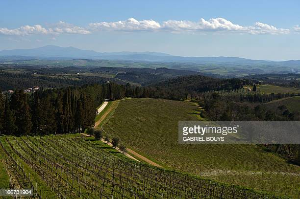 This picture shows a view of vineyards during a tour of 'L'Eroica' new Permanent Route of the vintage bikes event in Gaiole in Chianti in the Italian...